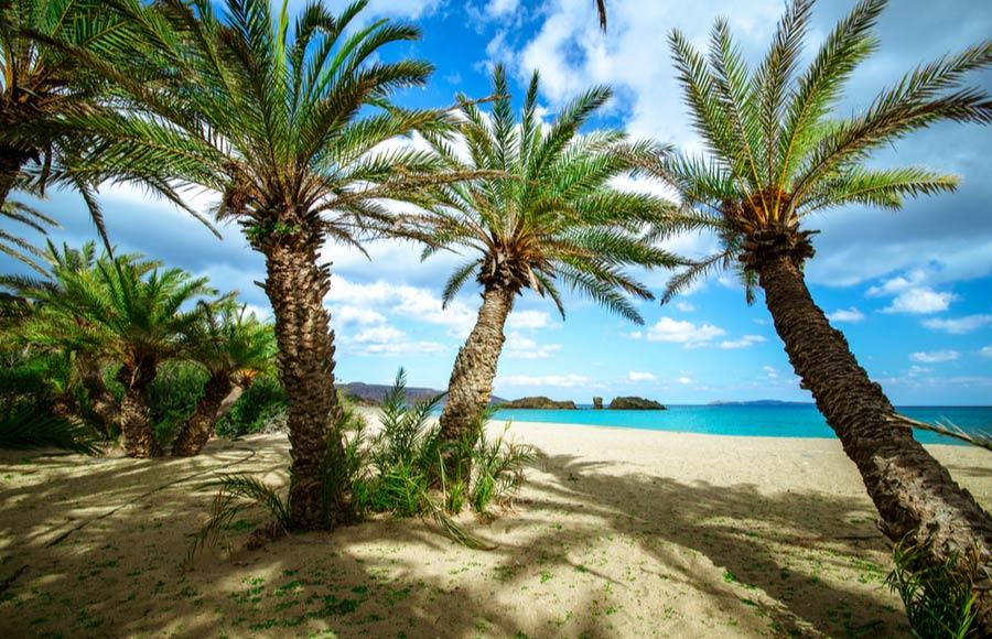 Palmbomen aan de kust van Vai